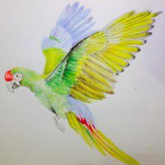 Ilustración papagayo
