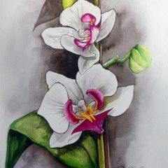 Ilustración Orquidea
